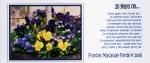 06FMF Postcard 6
