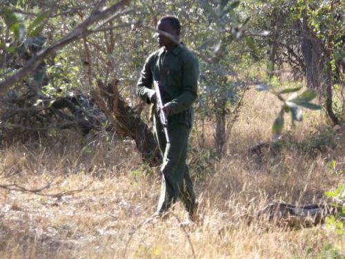 Coulran in bush