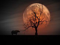 full moon rhino