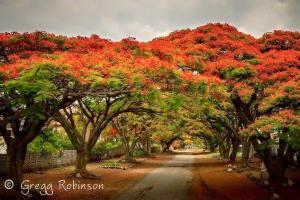 Beautiful book of Photos available © Gregg Robinson