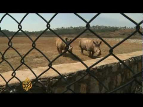rhino farm aljazeera